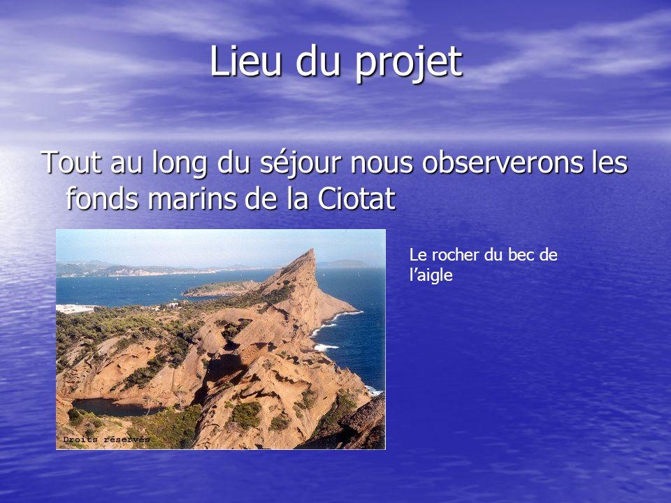 Lieu du projet Tout au long du séjour nous observerons les fonds marins de la Ciotat.