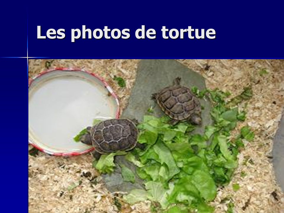 Les photos de tortue