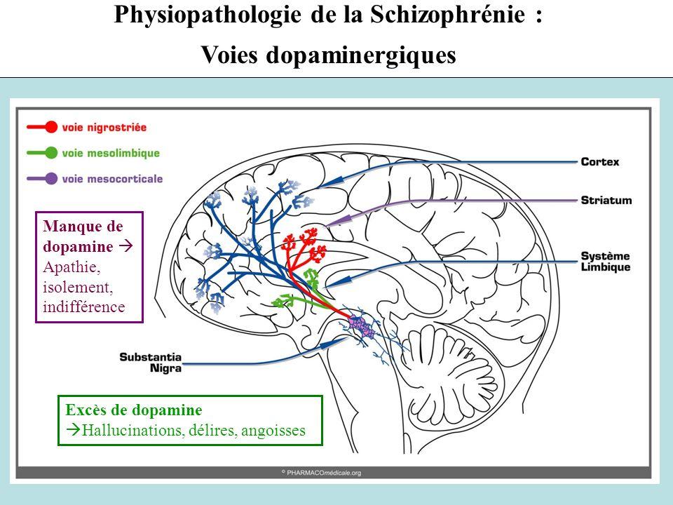 Physiopathologie de la Schizophrénie : Voies dopaminergiques