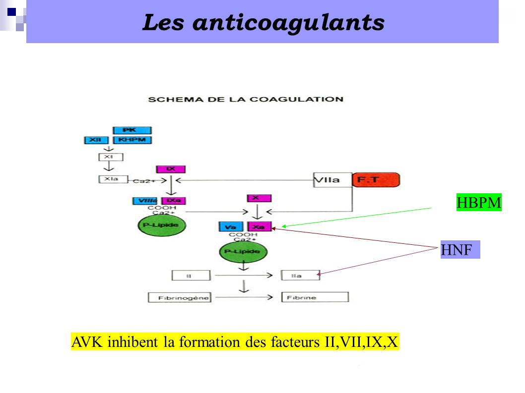 Les anticoagulants HBPM HNF