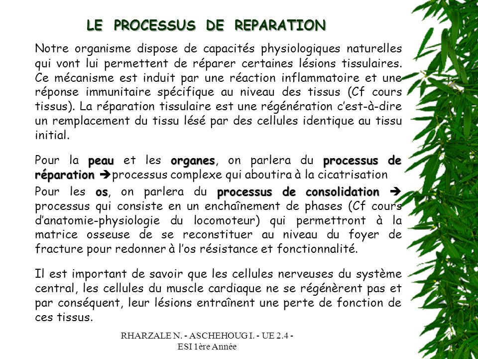 LE PROCESSUS DE REPARATION