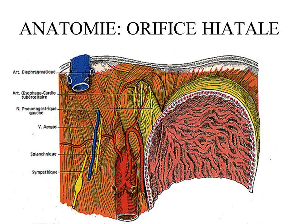 ANATOMIE: ORIFICE HIATALE