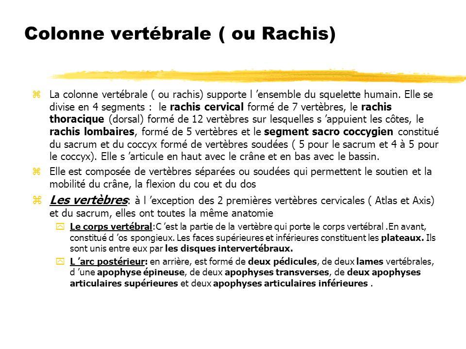 Colonne vertébrale ( ou Rachis)
