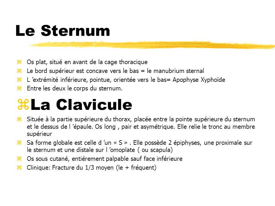 Le Sternum La Clavicule Os plat, situé en avant de la cage thoracique