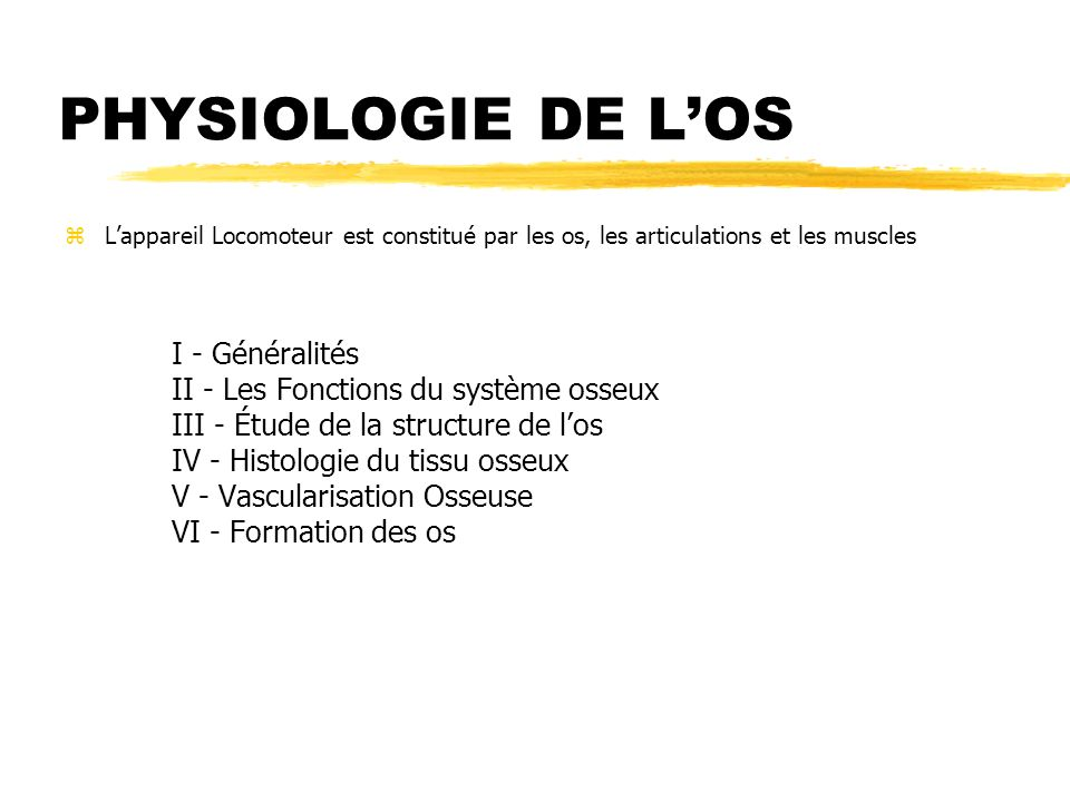 PHYSIOLOGIE DE L'OS II - Les Fonctions du système osseux
