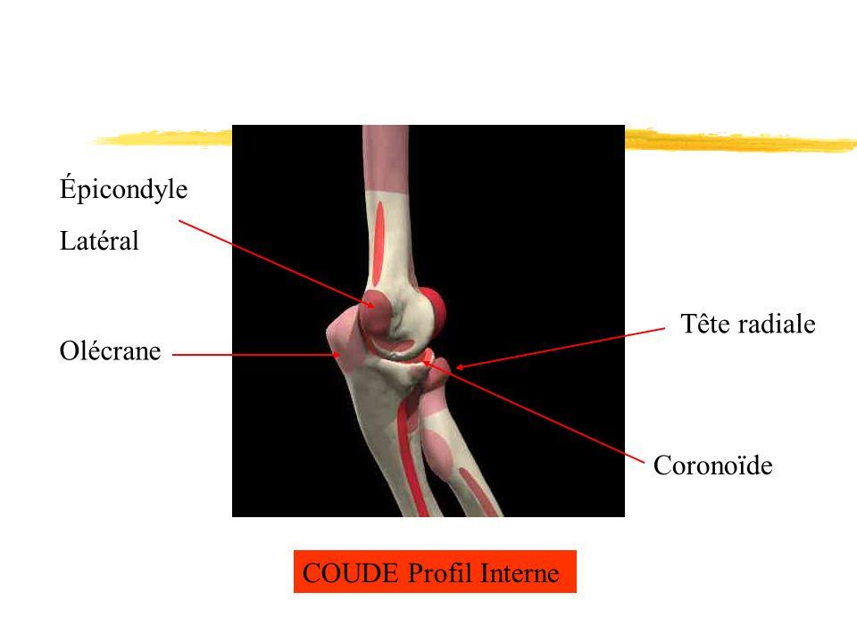 Épicondyle Latéral Tête radiale Olécrane Coronoïde COUDE Profil Interne