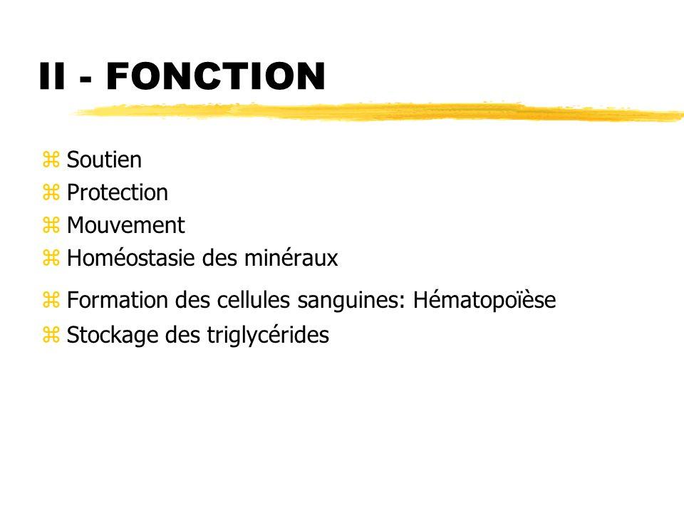 II - FONCTION Soutien Protection Mouvement Homéostasie des minéraux