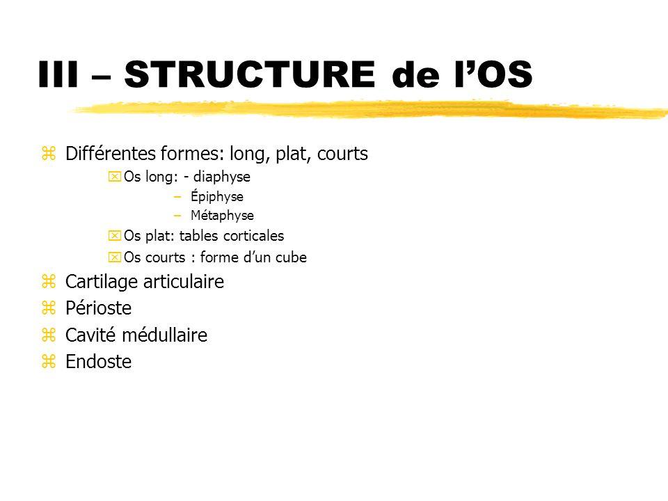 III – STRUCTURE de l'OS Différentes formes: long, plat, courts