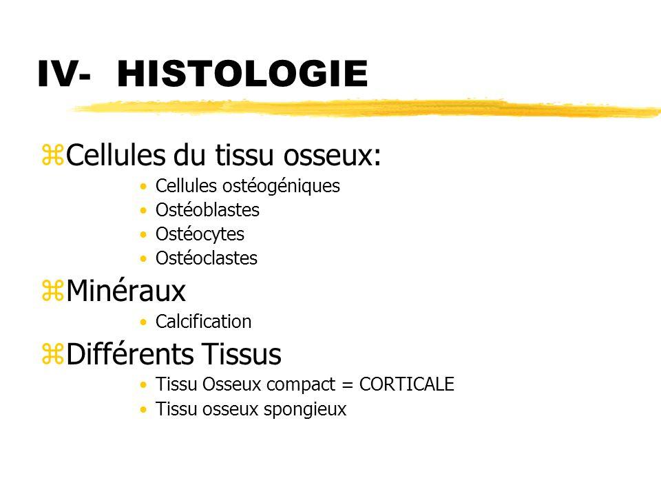IV- HISTOLOGIE Cellules du tissu osseux: Minéraux Différents Tissus