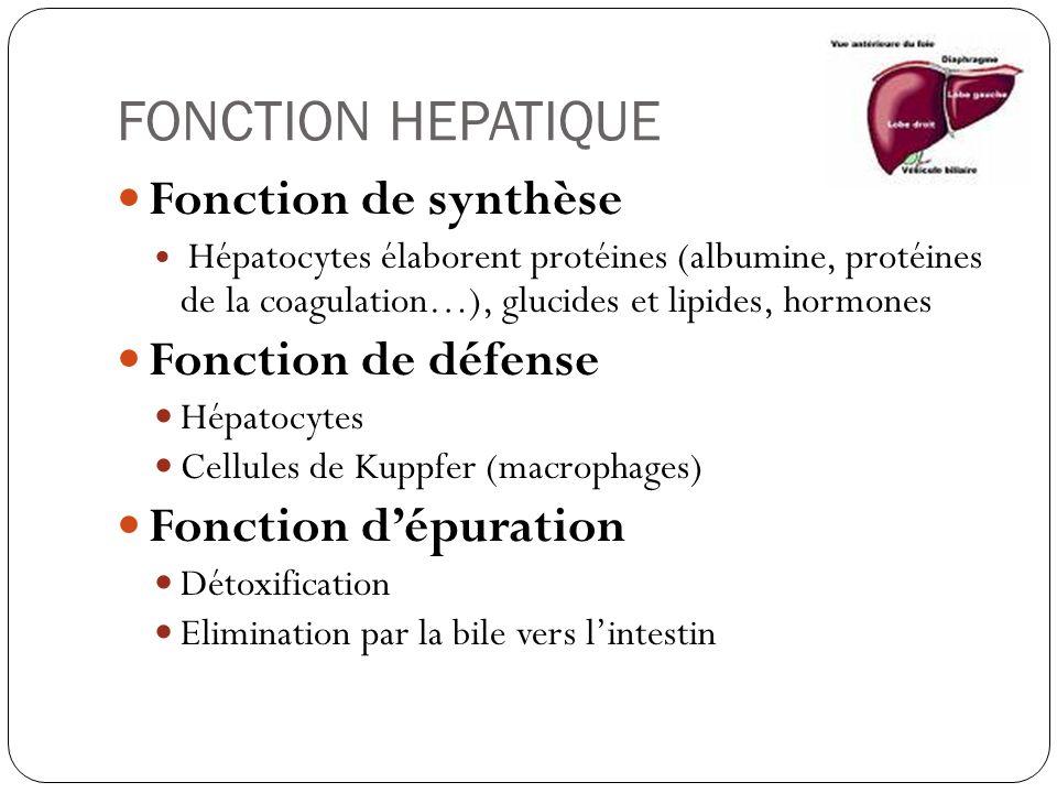 FONCTION HEPATIQUE Fonction de synthèse Fonction de défense