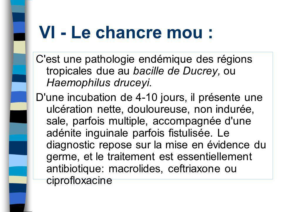 VI - Le chancre mou : C est une pathologie endémique des régions tropicales due au bacille de Ducrey, ou Haemophilus druceyi.