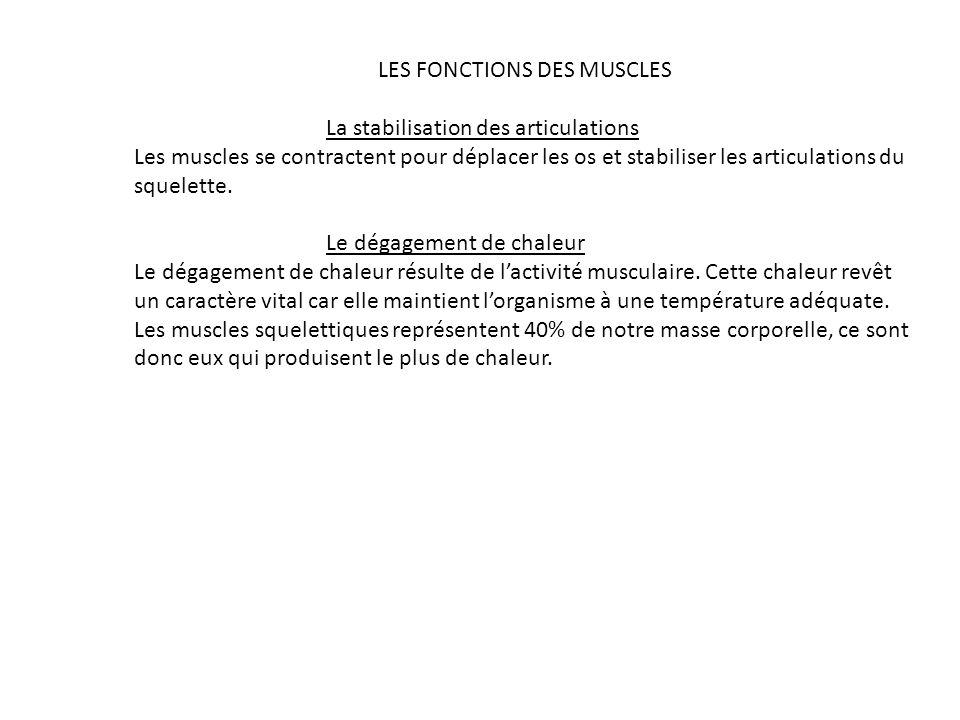 LES FONCTIONS DES MUSCLES