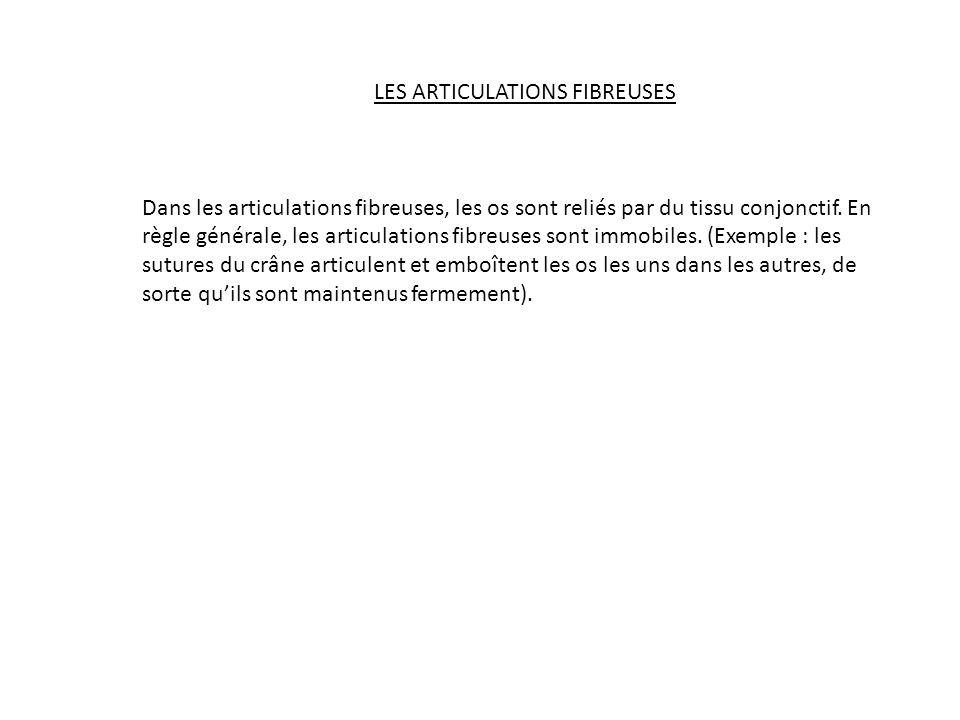 LES ARTICULATIONS FIBREUSES