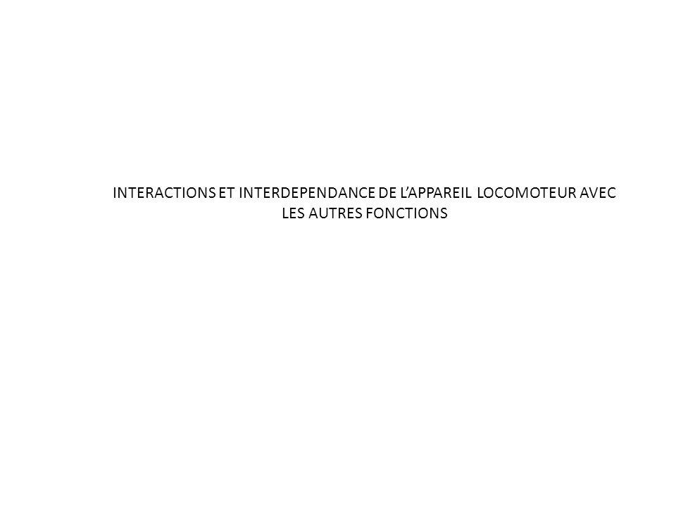 INTERACTIONS ET INTERDEPENDANCE DE L'APPAREIL LOCOMOTEUR AVEC LES AUTRES FONCTIONS