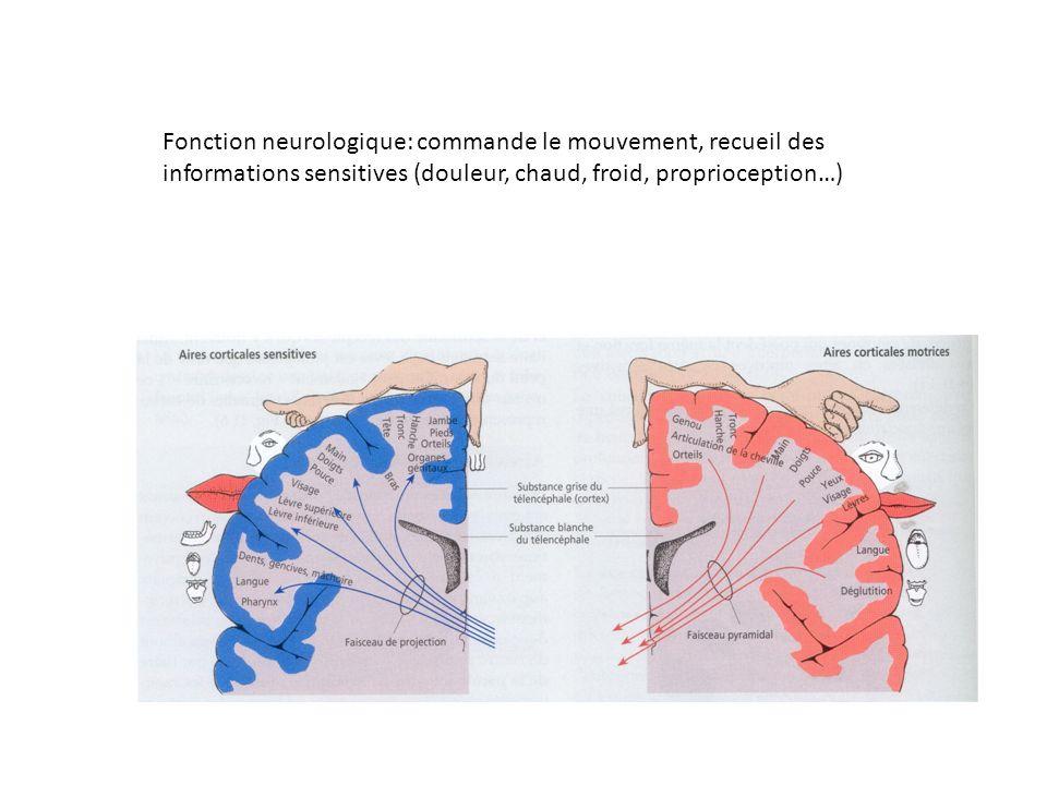 Fonction neurologique: commande le mouvement, recueil des informations sensitives (douleur, chaud, froid, proprioception…)