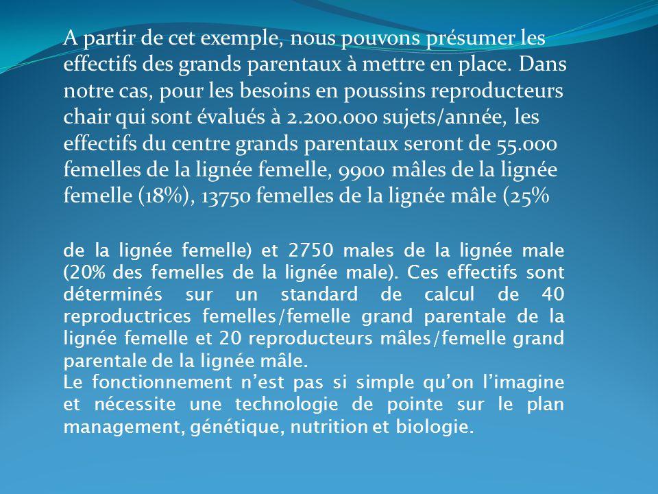 A partir de cet exemple, nous pouvons présumer les effectifs des grands parentaux à mettre en place. Dans notre cas, pour les besoins en poussins reproducteurs chair qui sont évalués à 2.200.000 sujets/année, les effectifs du centre grands parentaux seront de 55.000 femelles de la lignée femelle, 9900 mâles de la lignée femelle (18%), 13750 femelles de la lignée mâle (25%