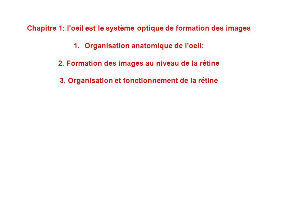 Chapitre 1: l oeil est le système optique de formation des images