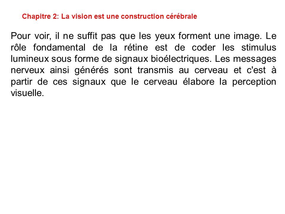 Chapitre 2: La vision est une construction cérébrale