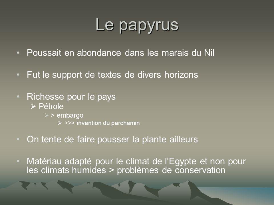 Le papyrus Poussait en abondance dans les marais du Nil