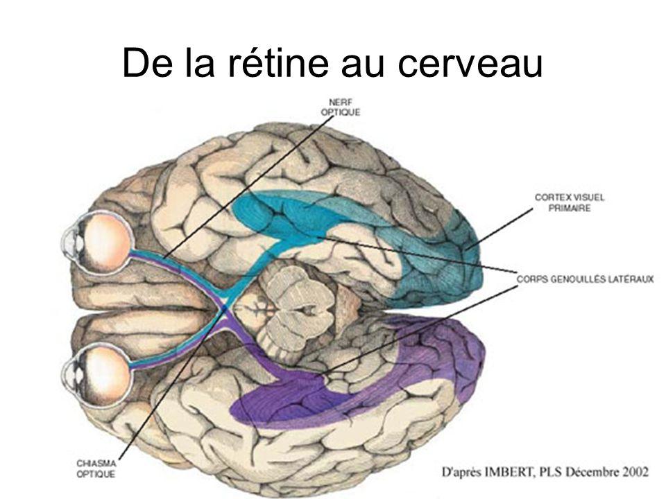 De la rétine au cerveau