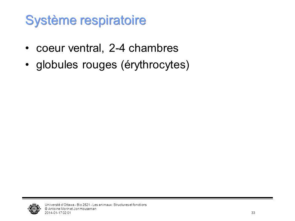 Système respiratoire coeur ventral, 2-4 chambres