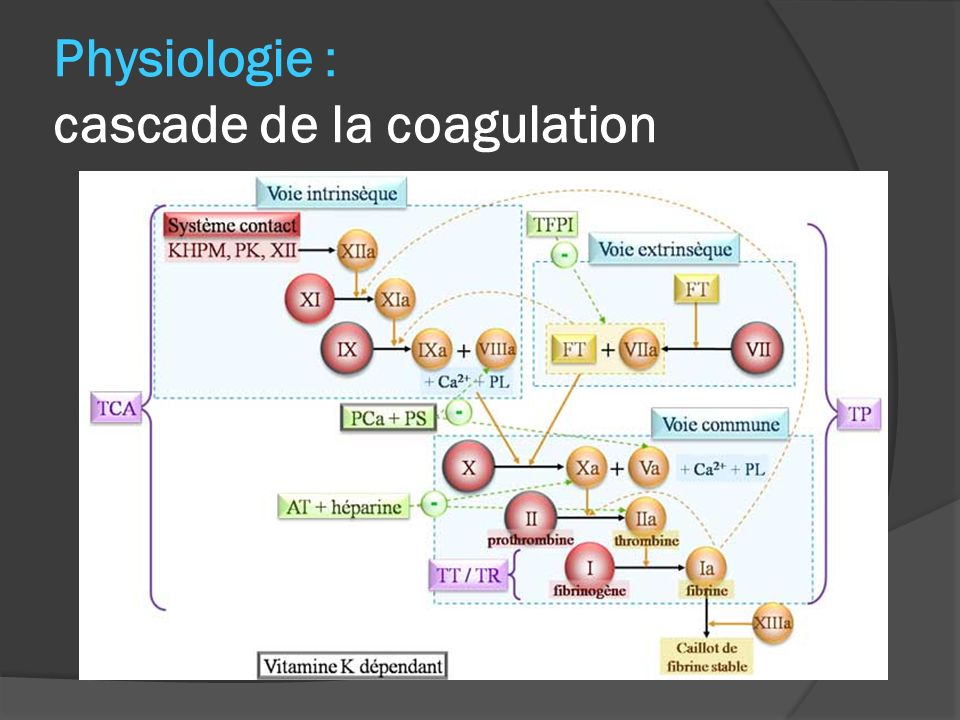 Physiologie : cascade de la coagulation