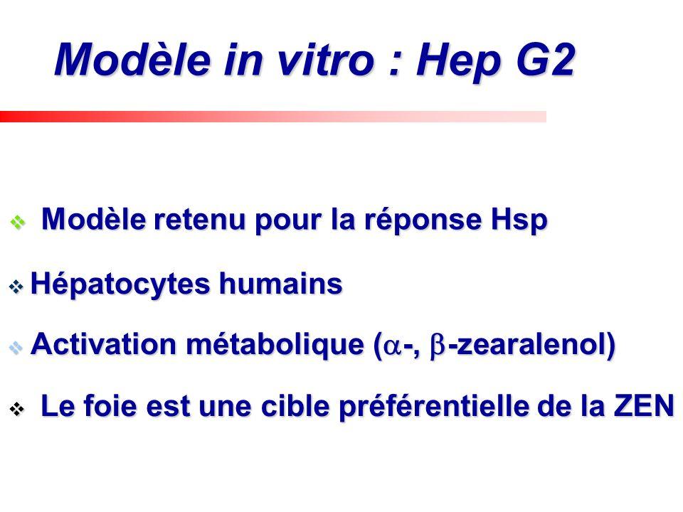Modèle in vitro : Hep G2 Activation métabolique (-, -zearalenol)