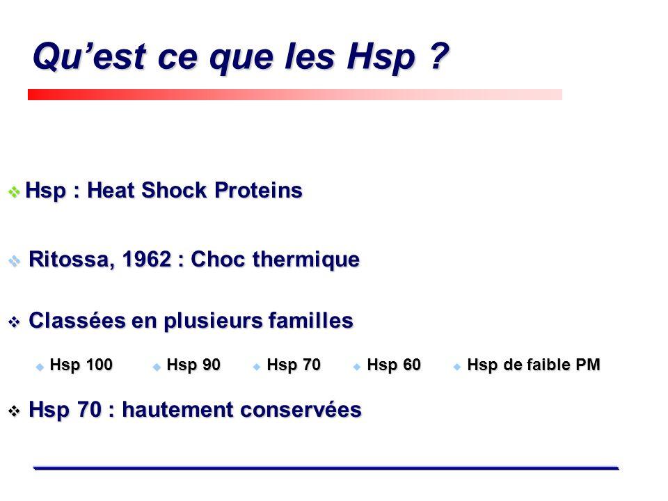 Qu'est ce que les Hsp Hsp 100 Hsp 90 Hsp 70 Hsp 60 Hsp de faible PM