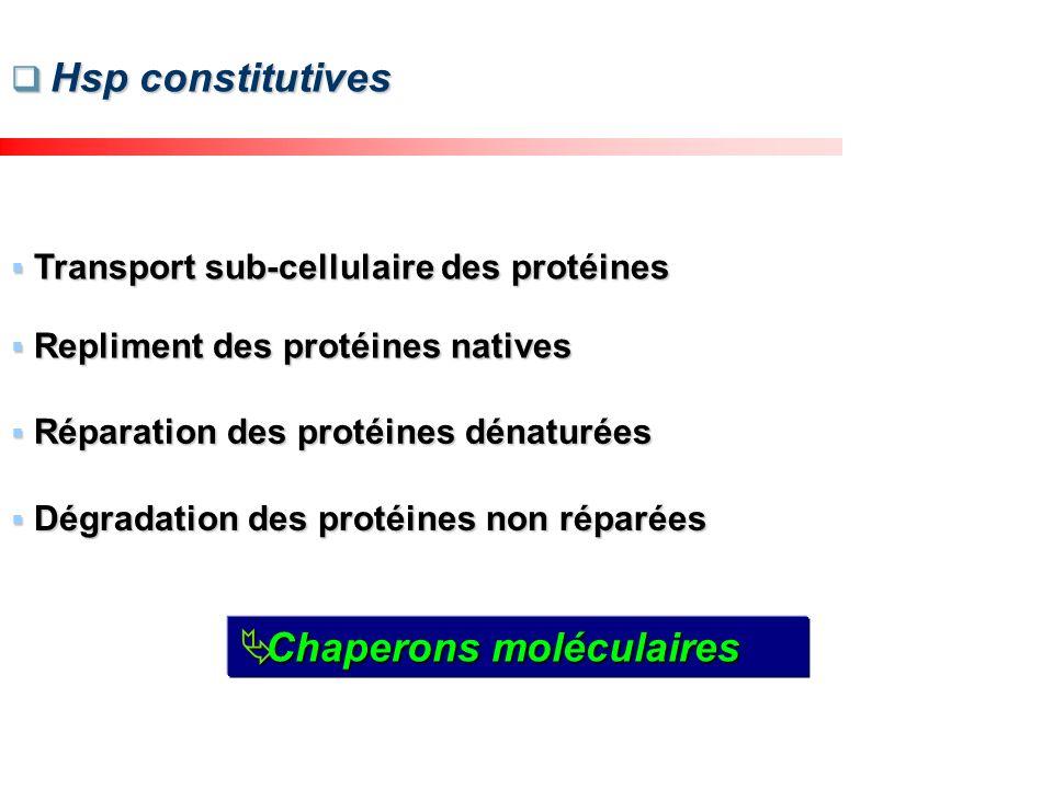 Transport sub-cellulaire des protéines