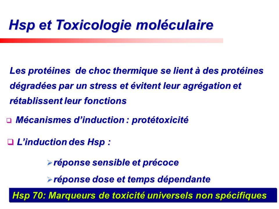 Hsp et Toxicologie moléculaire