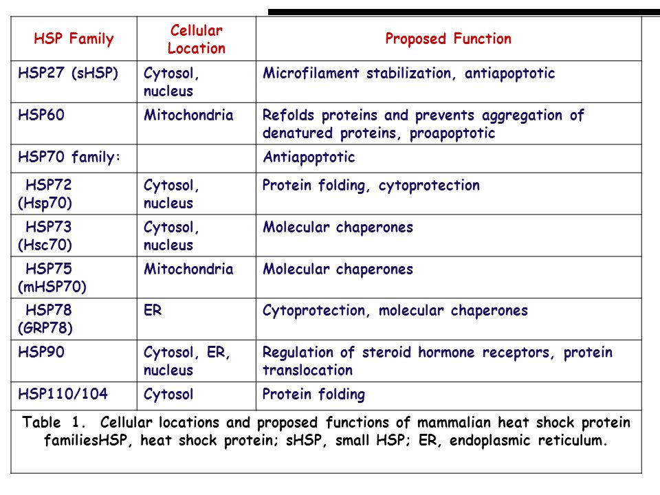 HSP FamilyCellular Location. Proposed Function. HSP27 (sHSP) Cytosol, nucleus. Microfilament stabilization, antiapoptotic.