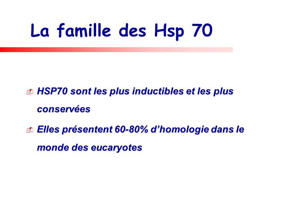 La famille des Hsp 70 HSP70 sont les plus inductibles et les plus conservées.