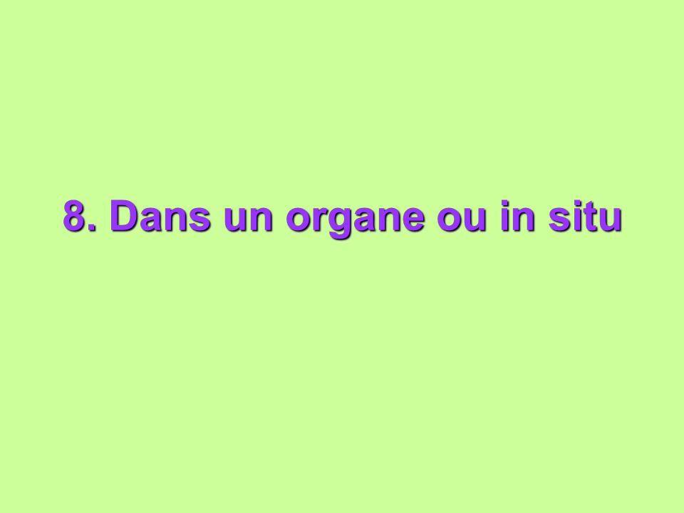 8. Dans un organe ou in situ