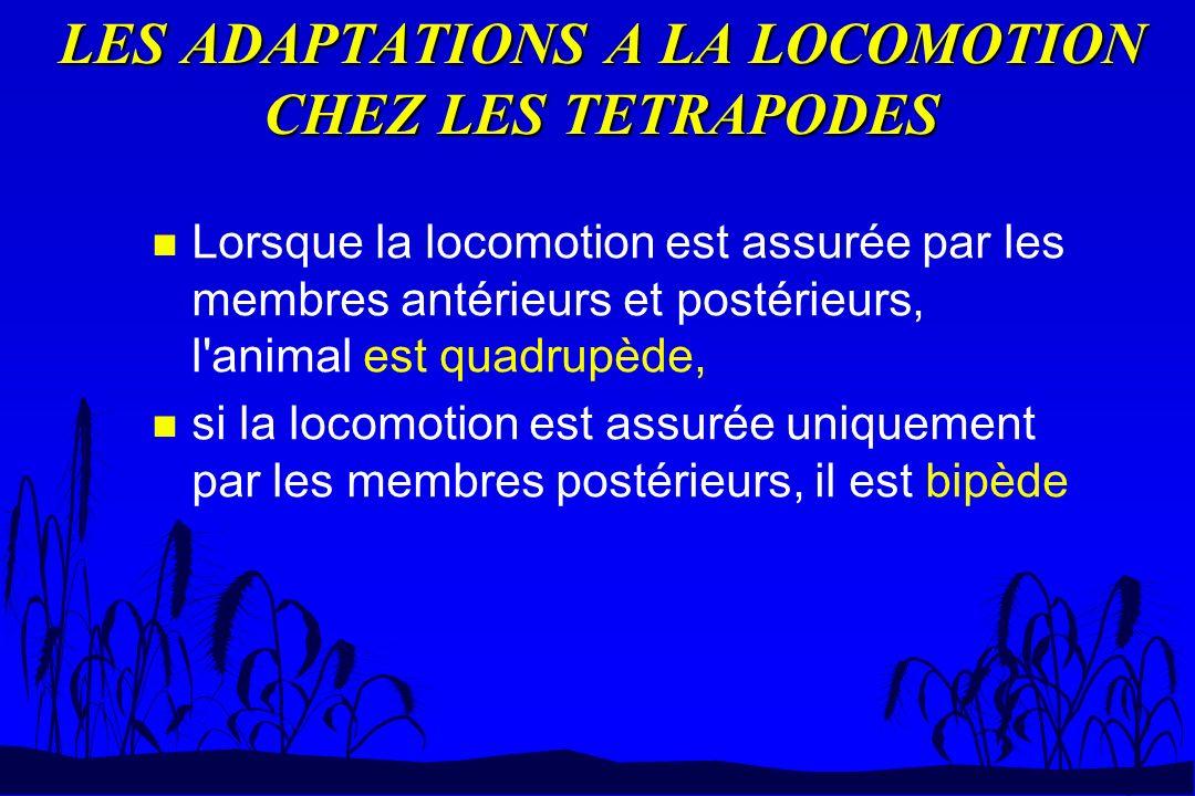 LES ADAPTATIONS A LA LOCOMOTION CHEZ LES TETRAPODES