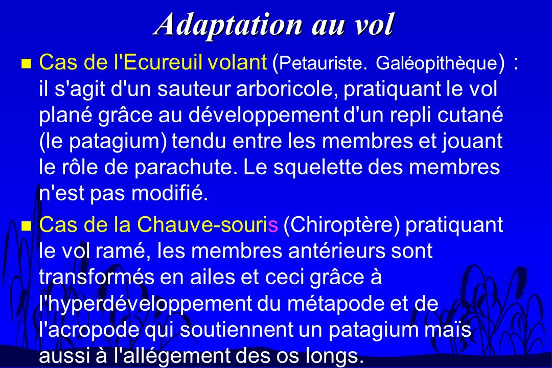 Adaptation au vol