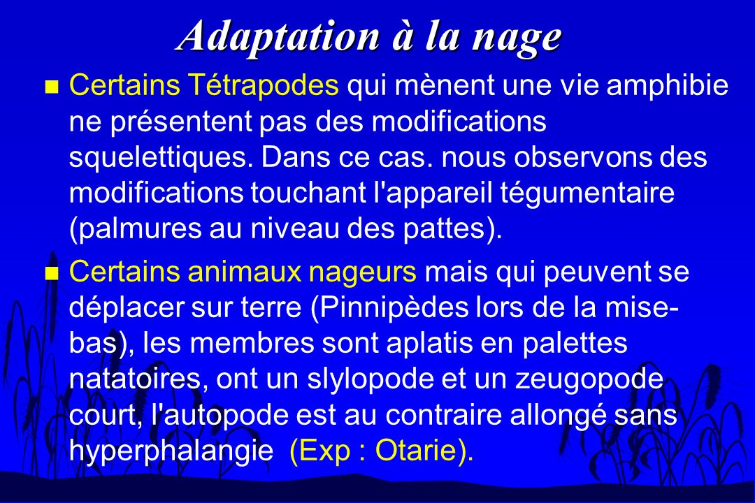 Adaptation à la nage