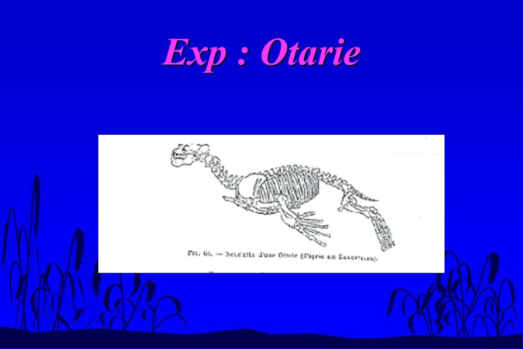 Exp : Otarie