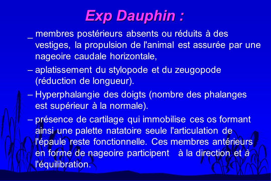 Exp Dauphin : _ membres postérieurs absents ou réduits à des vestiges, la propulsion de l animal est assurée par une nageoire caudale horizontale,