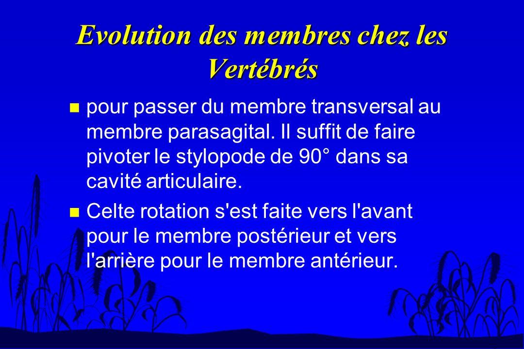Evolution des membres chez les Vertébrés