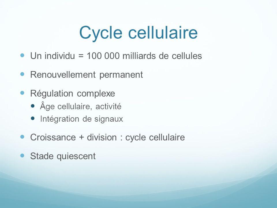 Cycle cellulaire Un individu = 100 000 milliards de cellules