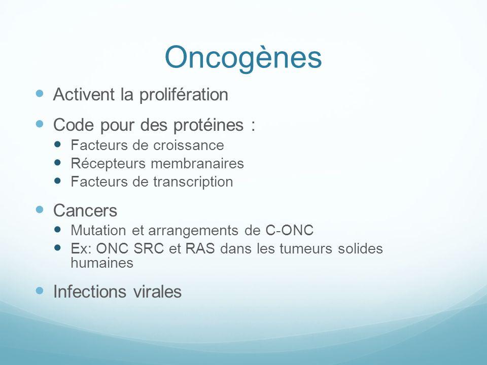 Oncogènes Activent la prolifération Code pour des protéines : Cancers