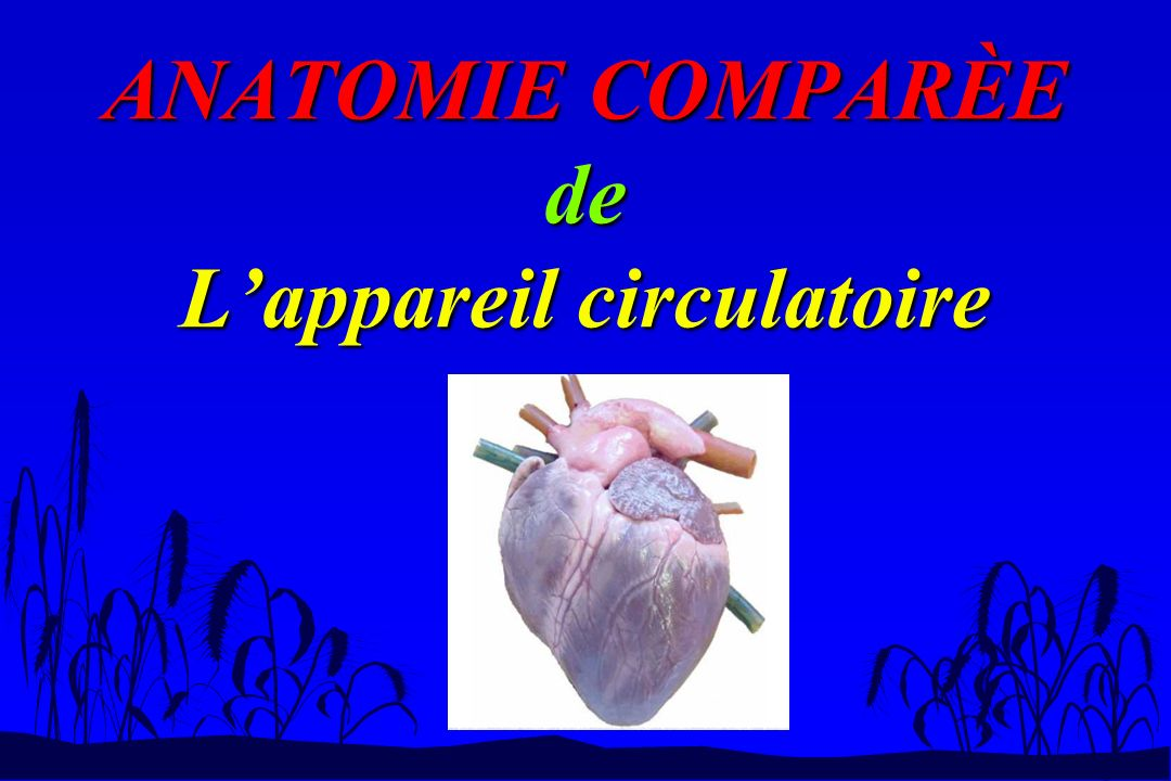 ANATOMIE COMPARÈE de L'appareil circulatoire