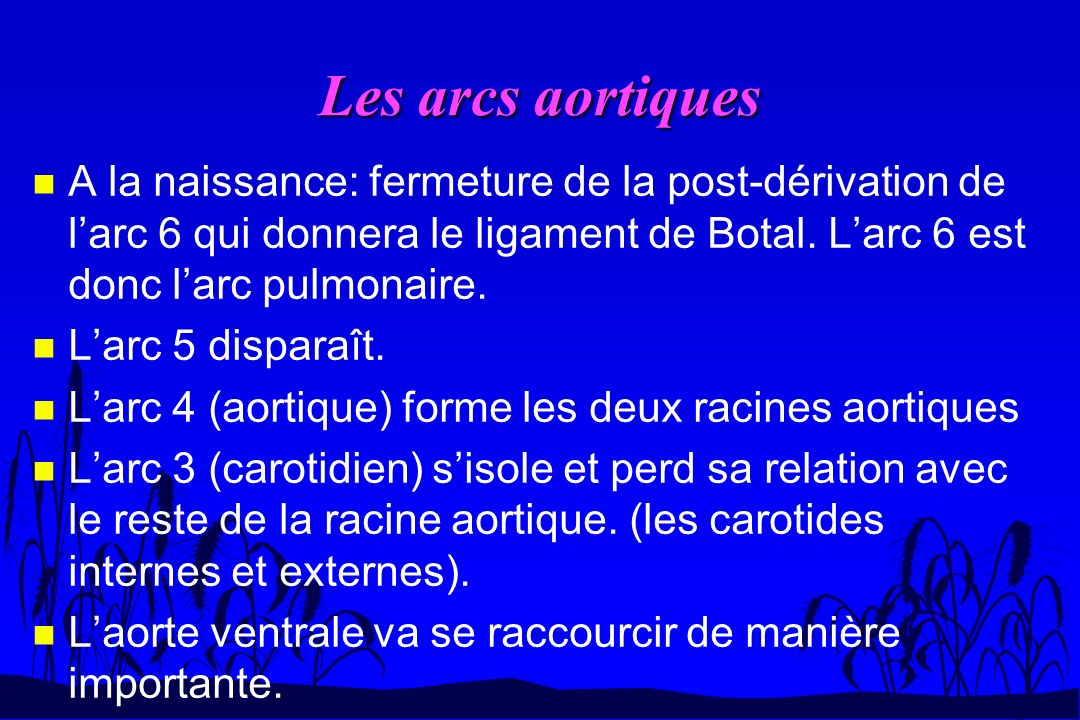 Les arcs aortiques A la naissance: fermeture de la post-dérivation de l'arc 6 qui donnera le ligament de Botal. L'arc 6 est donc l'arc pulmonaire.