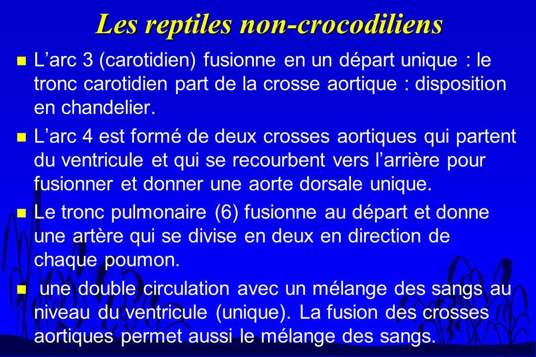 Les reptiles non-crocodiliens