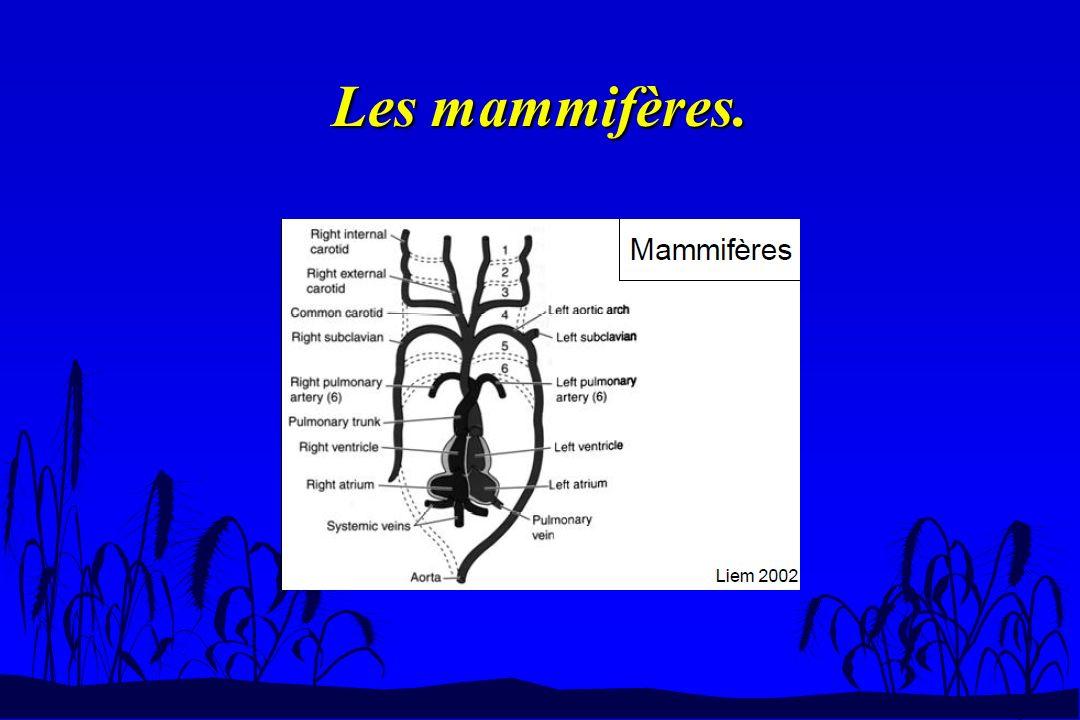 Les mammifères.