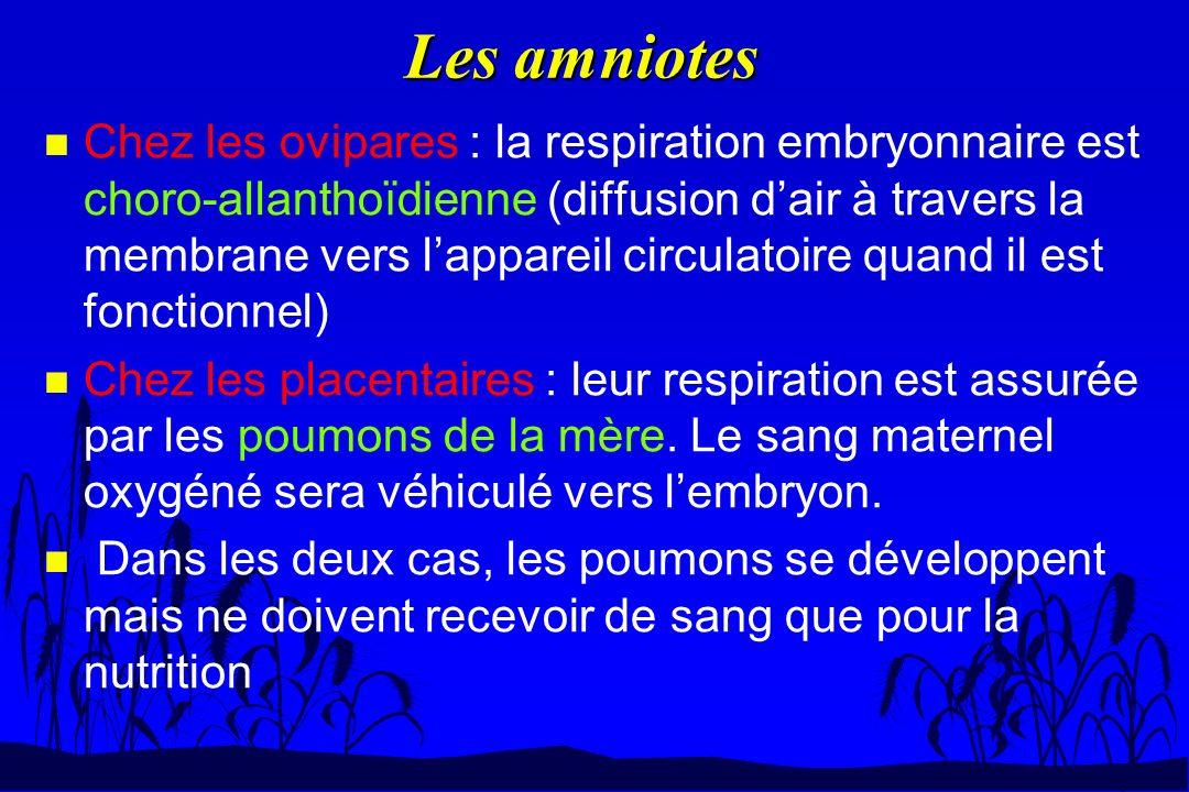 Les amniotes