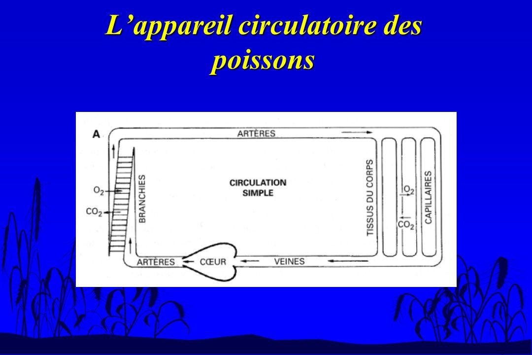 L'appareil circulatoire des poissons