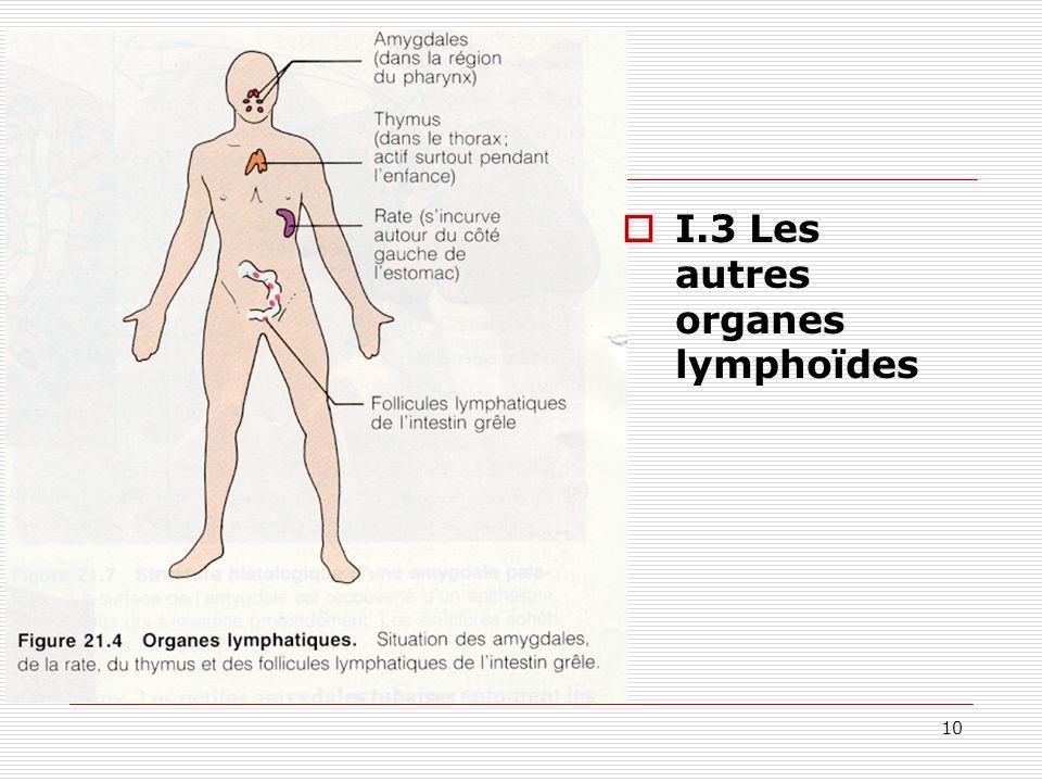 I.3 Les autres organes lymphoïdes