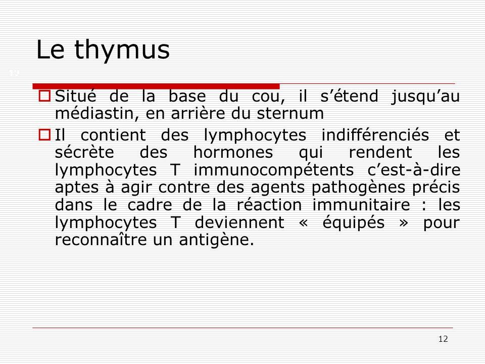 Le thymus12. Situé de la base du cou, il s'étend jusqu'au médiastin, en arrière du sternum.