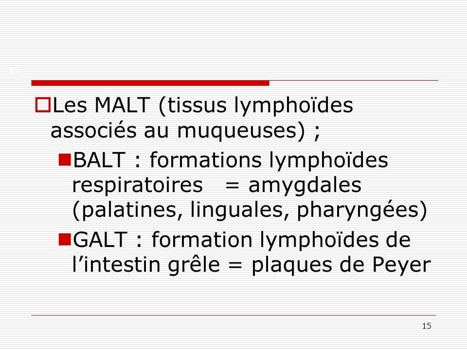 Les MALT (tissus lymphoïdes associés au muqueuses) ;